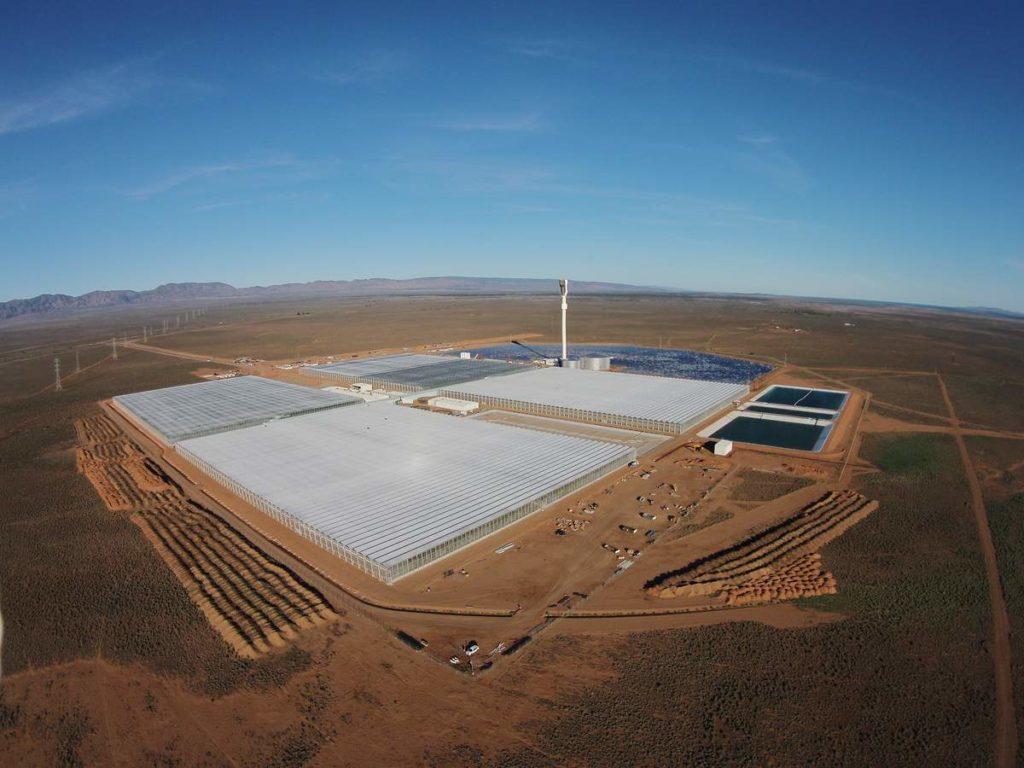 Greenhouse Desert