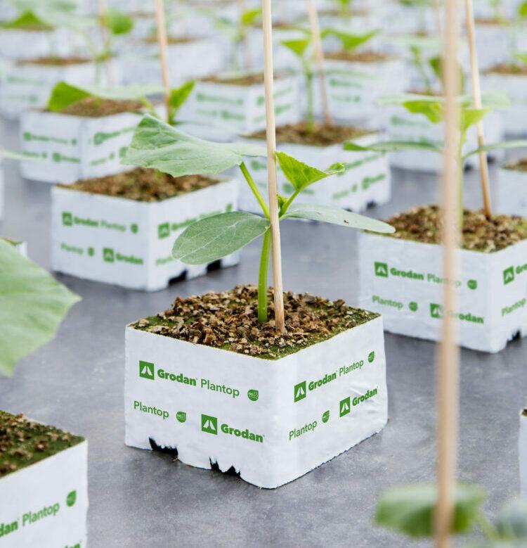Grodan cultivation systems