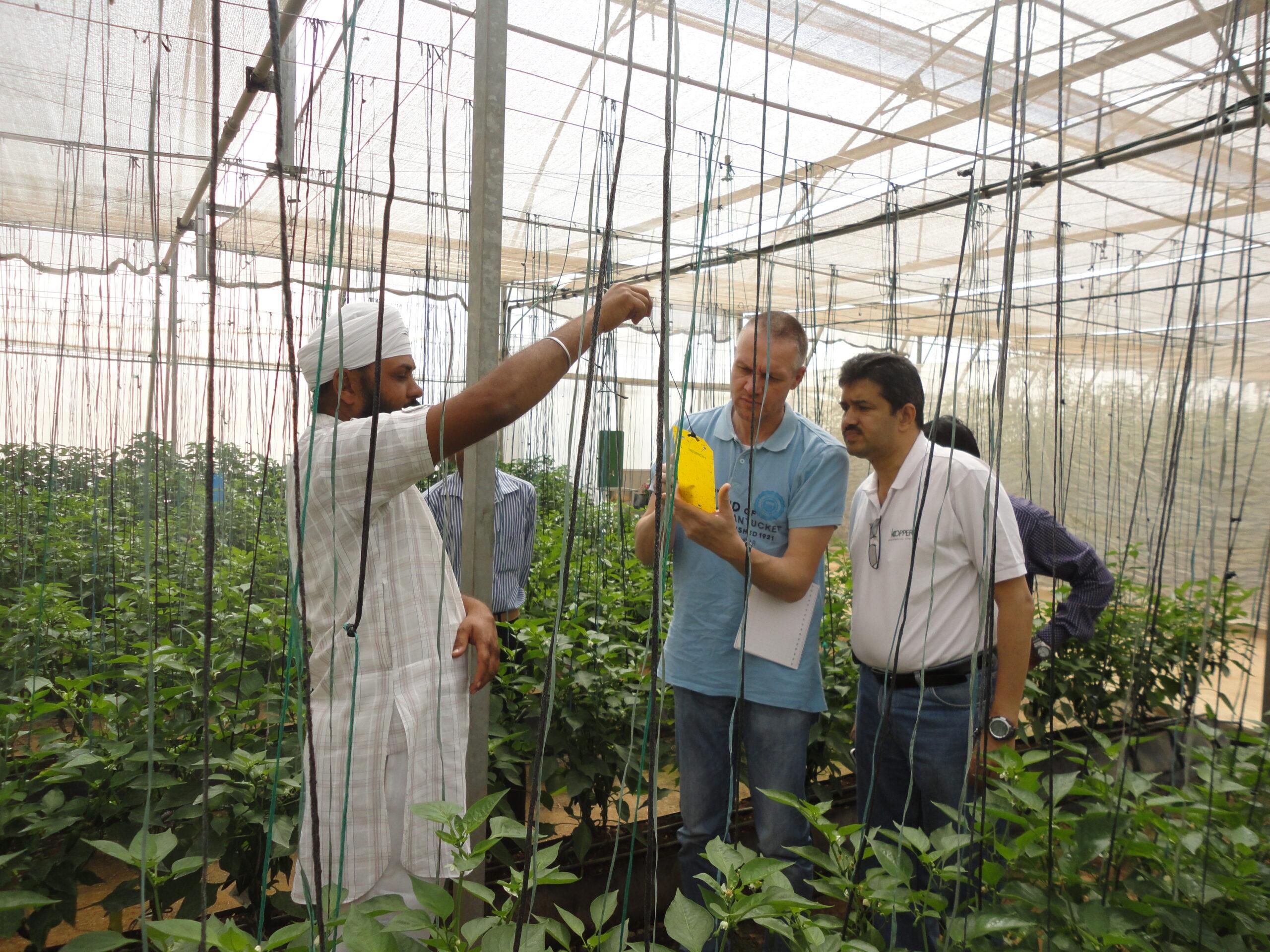 Greenhouse India